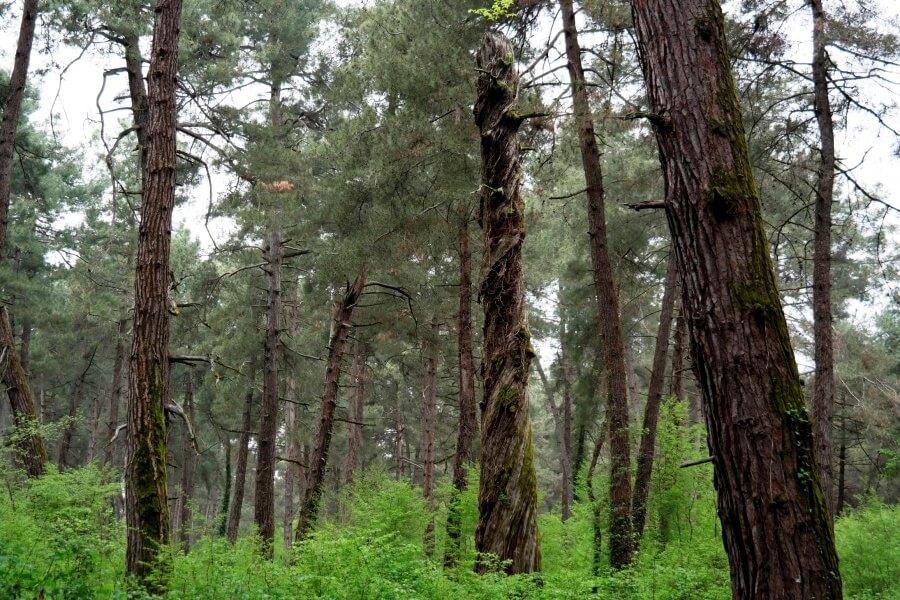 Лес в 10 м. от пляжа