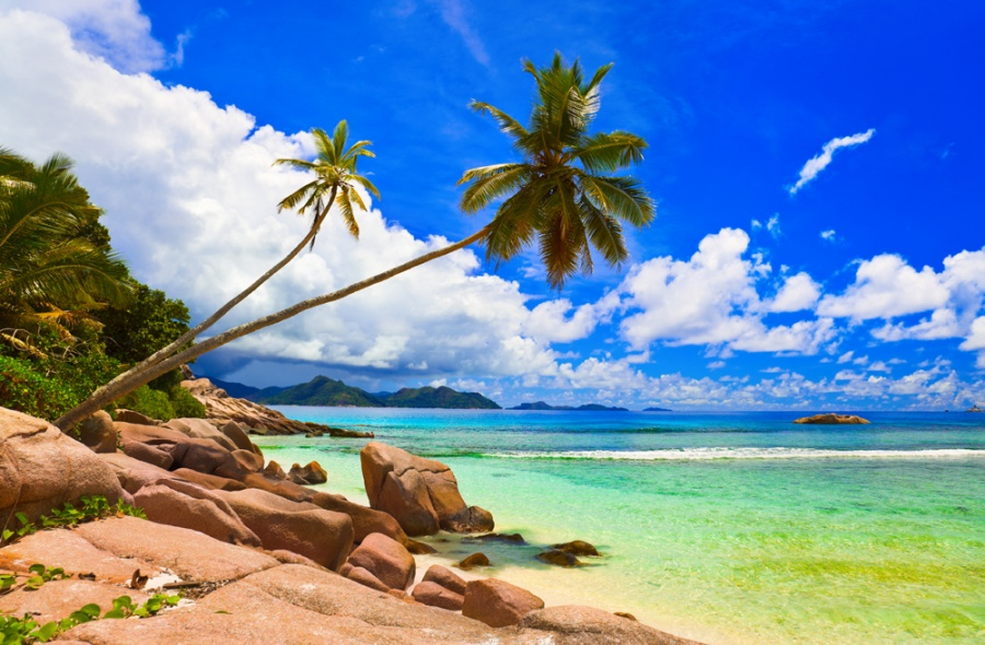 Palms on beach at island La Digue, Seychelles - vacation background