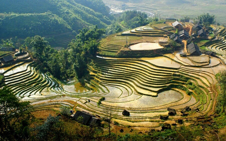 Vietnam.Risovie polya